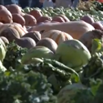 Dane County Farmer's Market Thumbnail Image